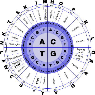 Genetic Code by J_Alves (openclipart.org)